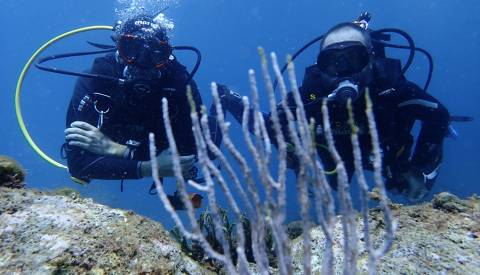 foto de Diving into the Medes Islands